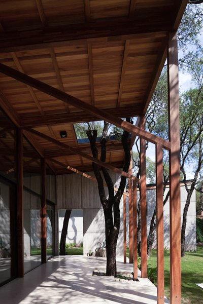 """The slender timber columns supporting the """"gallery""""—an outdoor living space—are a subtle nod to the surrounding forest."""